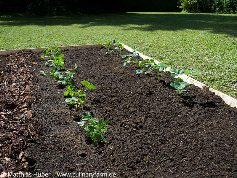 Einen bio garten selber anlegen - Garten anfanger ...