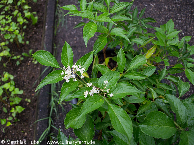 Einen Bio Garten Selber Anlegen